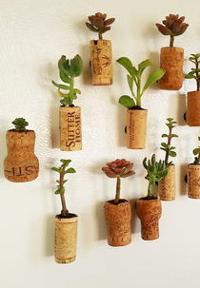 Succulent Wine Cork Planter Magnets