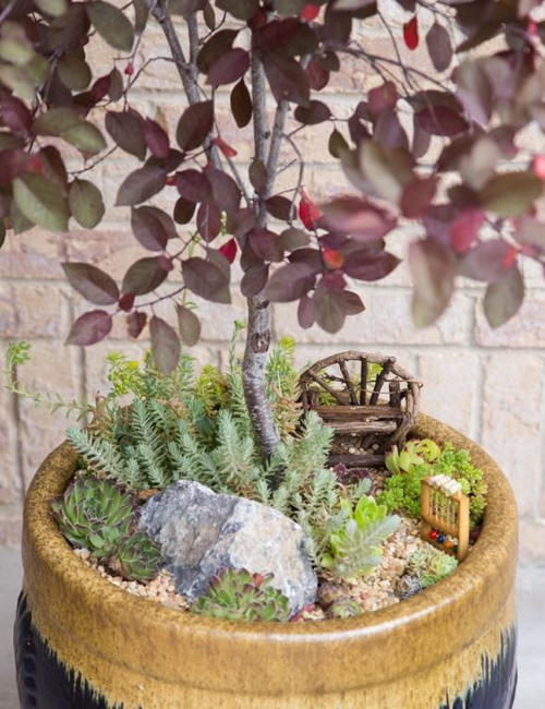 How to Make a Succulent Fairy Garden