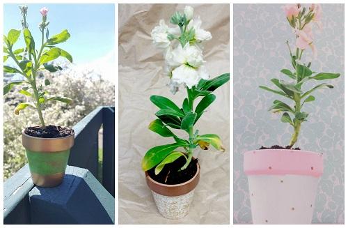 Petunia Painted Pot Crafts