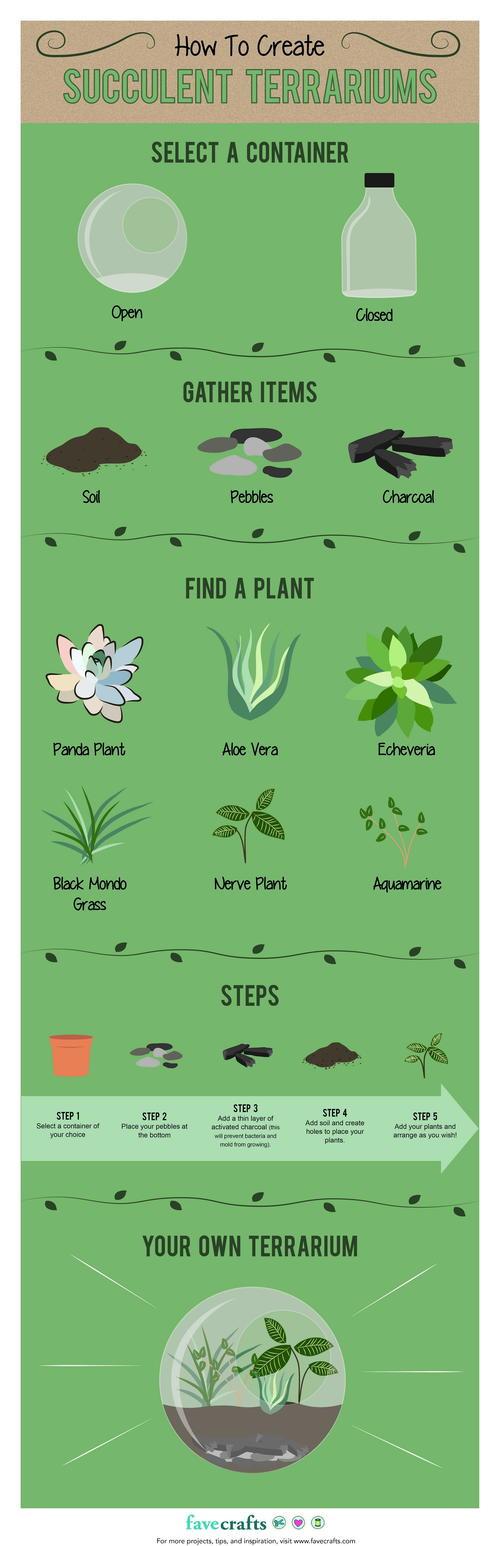 DIY Succulent Terrarium Ideas Infographic