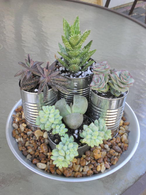 Super Easy Succulent Indoor Garden Ideas