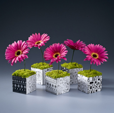 hipster gerbera daisy cube Spring is Finally Here