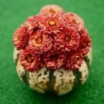 gourd-flowers