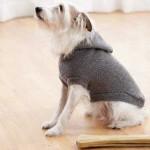 dog-coat-hooded