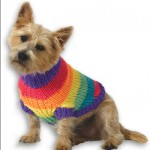rainbow-dog-sweater