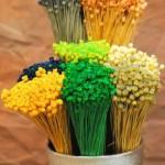 straw-flowers