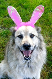 bunny dog Does Your Pet Wear Clothing?
