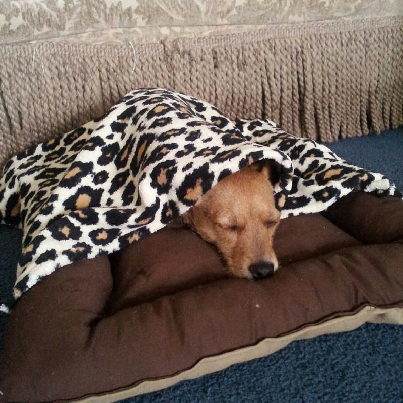 diy-dog-bed-sewing-pattern