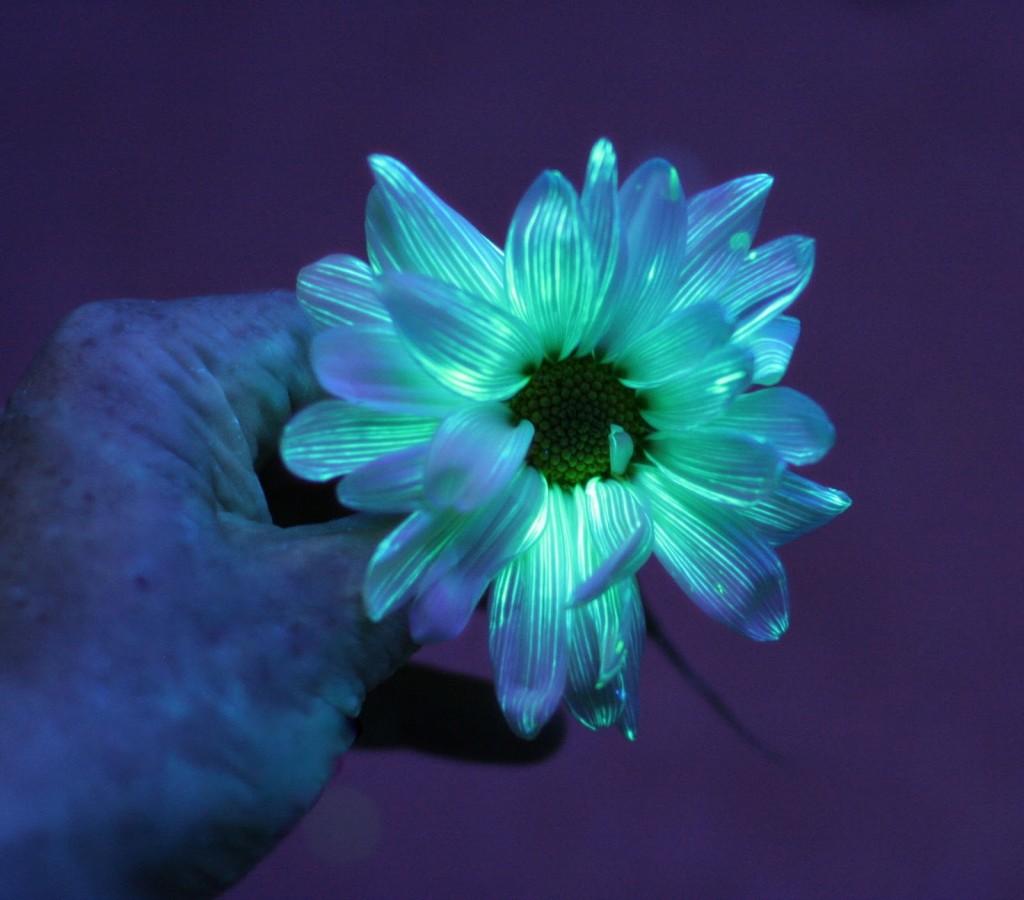 glowing6